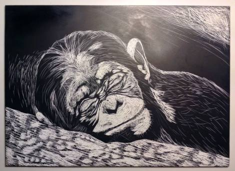 sleeping monkey.jpg